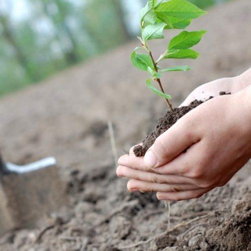 Município de Seia promove ação de reflorestação em área ardida