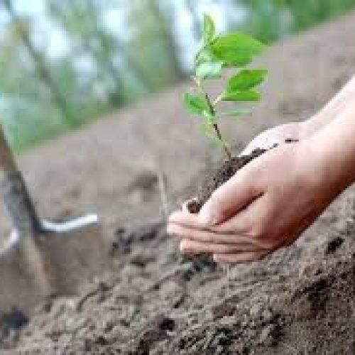 Governo disponibiliza 28 milhões para mudar espécies em áreas ardidas