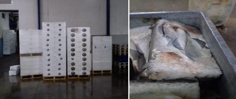 ASAE apreendeu cerca de 14 toneladas de bacalhau em Ílhavo
