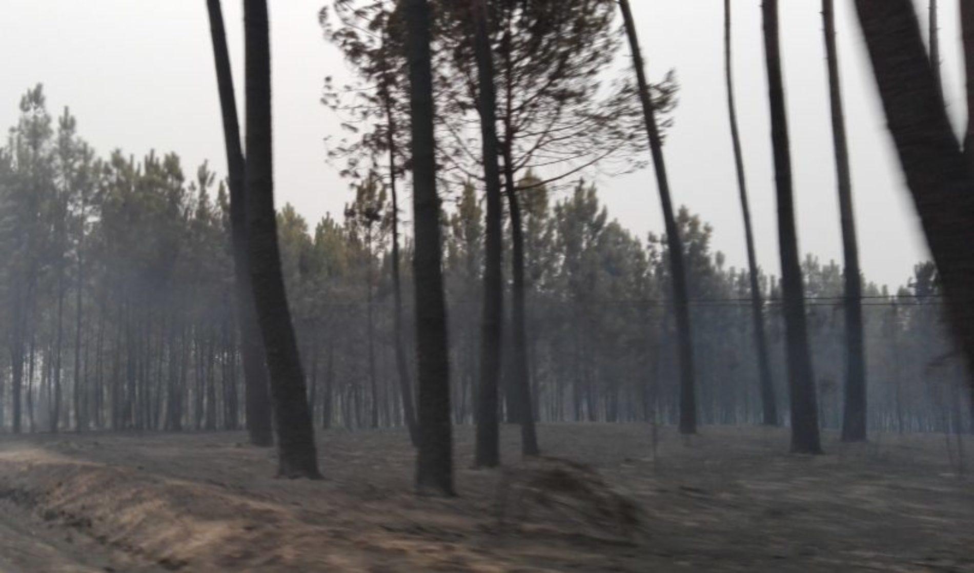 Incêndios: Estado faz leilão de madeira queimada e espera recolher mais de 25 milhões de euros