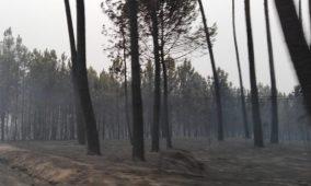 Município oliveirense remove árvores queimadas que não foram cortadas pelos proprietários