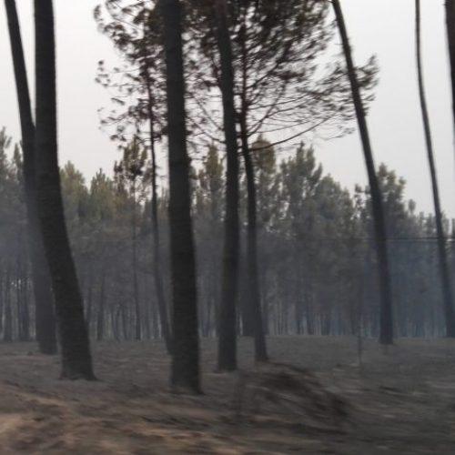 Feridos dos incêndios do ano passado isentos de taxas moderadoras