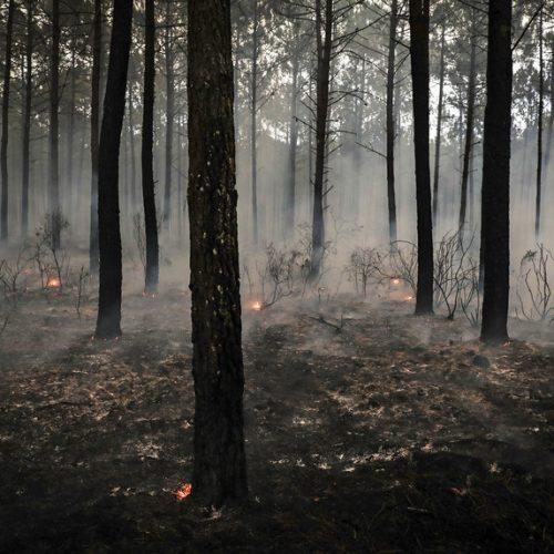 Lotes de madeira ardida renderam 2,85 milhões em hasta pública