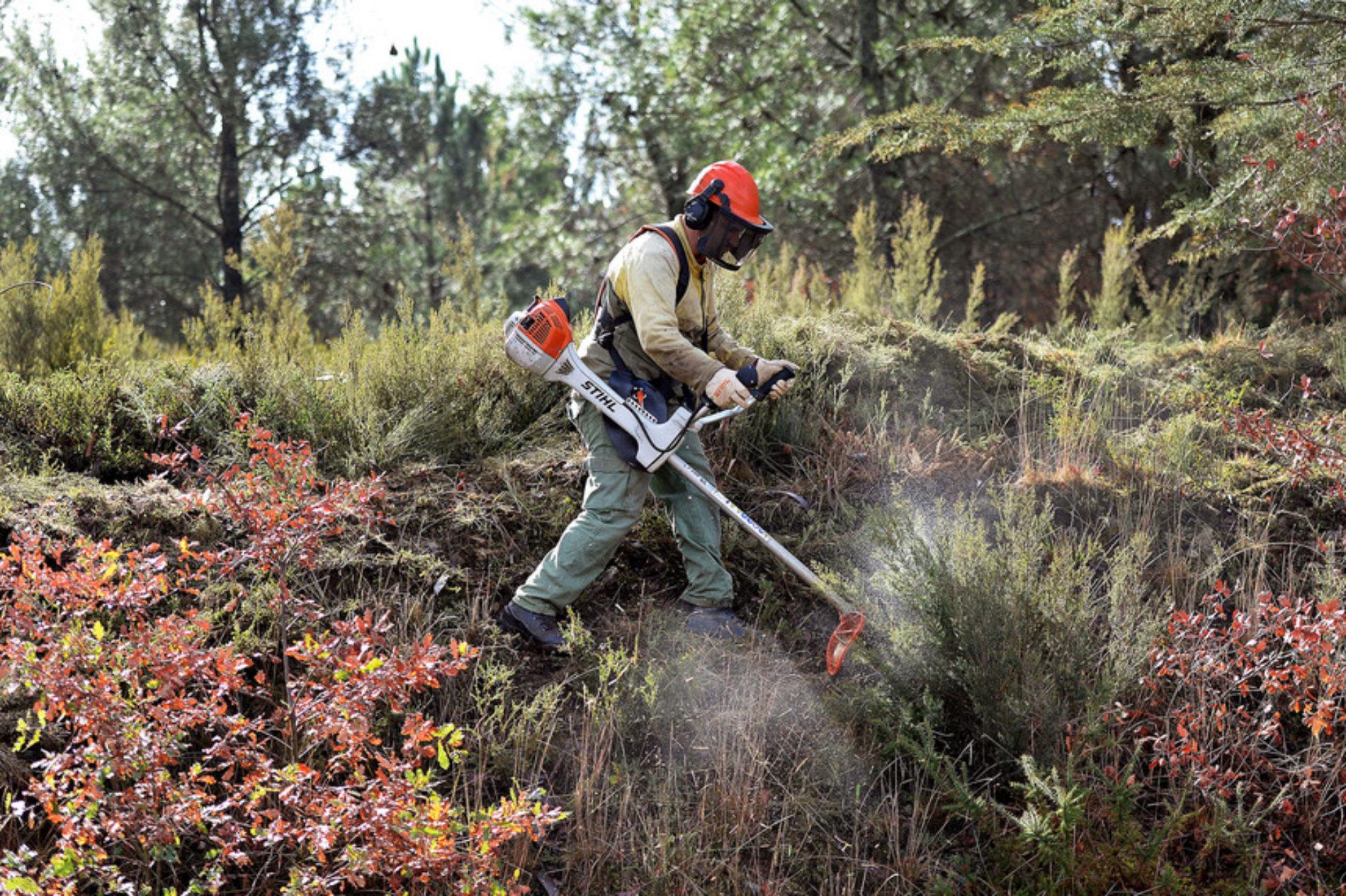 Limpeza de terrenos tem de estar concluída até 15 de março