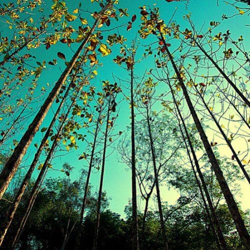 PDR 2020: Abertas candidaturas a apoio à florestação de terras não agrícolas