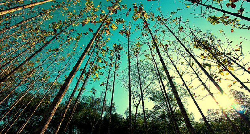 Seia: Inscrições abertas para Voluntariado Jovem para a Natureza e Florestas