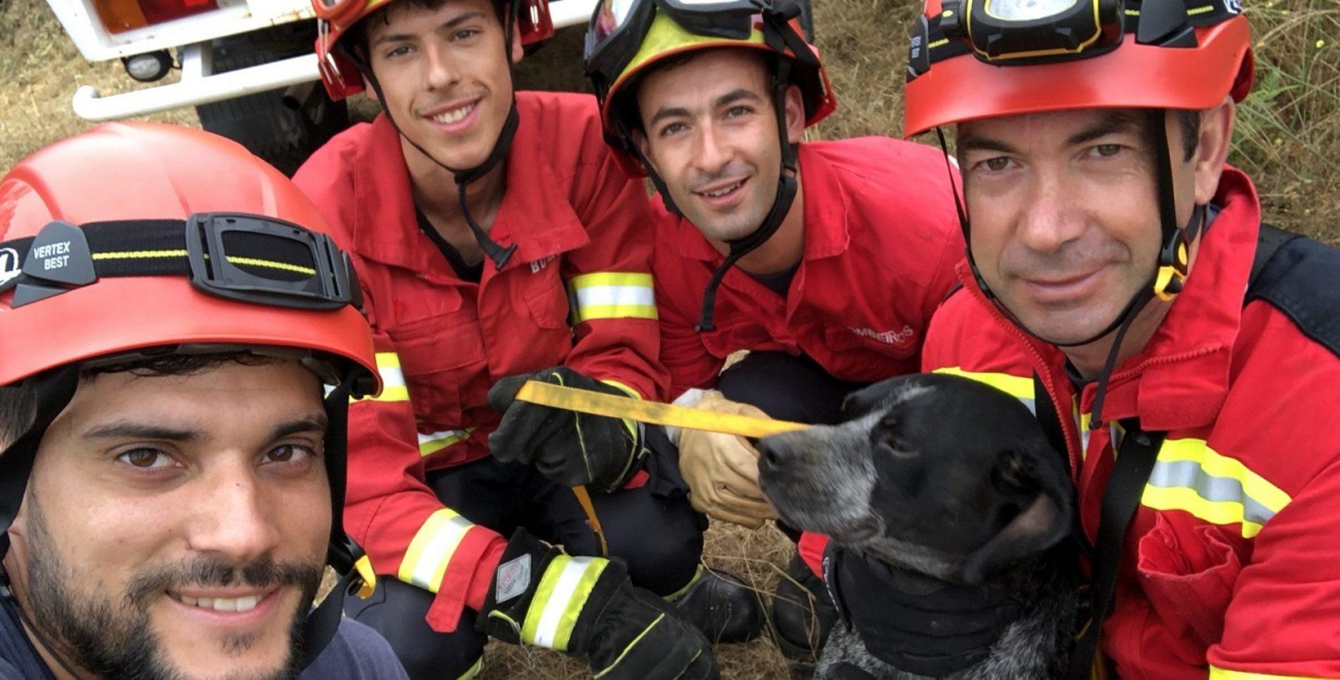 Bombeiros de Oliveira do Hospital resgataram cadela de interior de um poço