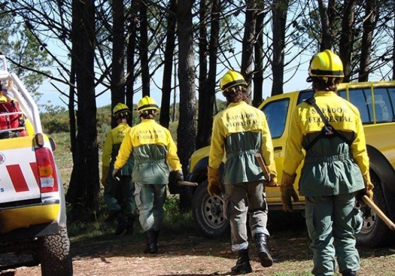 País: Governo abre concurso para criação de brigadas de sapadores florestais