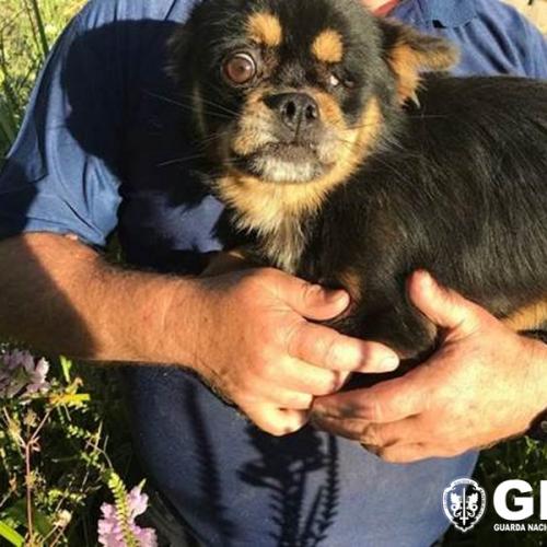 Coimbra: GNR resgatou cão de interior de um poço
