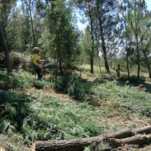 Município de Penacova conta com uma nova equipa de Sapadores Florestais