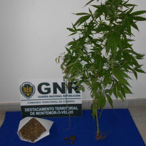 Soure: Homem detido por tráfico de estupefacientes