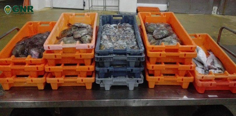 Região: GNR apreende cerca de 300 quilos de pescado