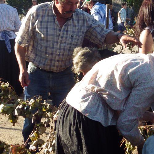 Festa das Vindimas revive tradição que se está a perder em Lagares da Beira (com vídeo)