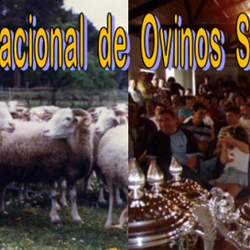 ANCOSE promove 33º Concurso Nacional de Ovinos Serra da Estrela