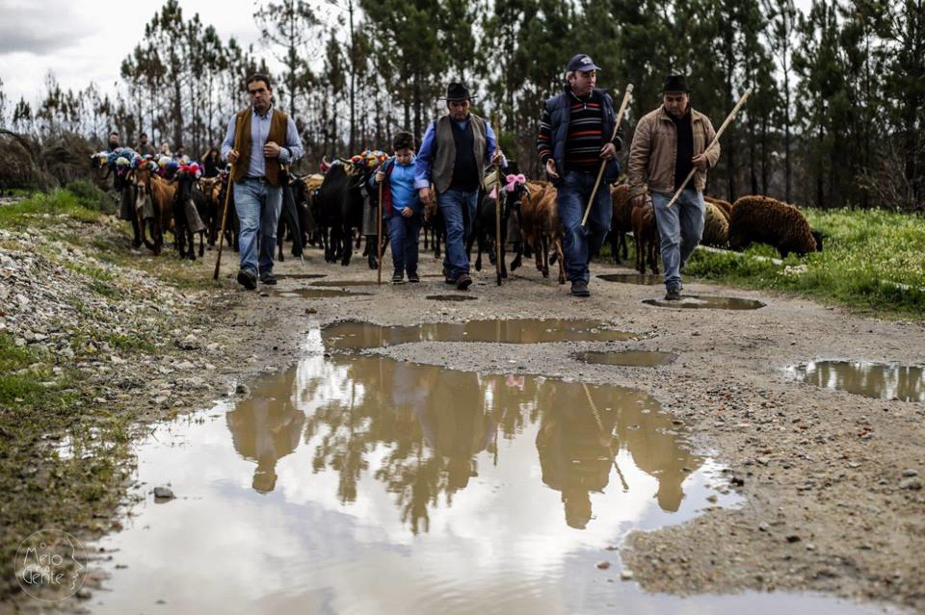 Incêndios: Tiago Cerveira estreia documentário sobre romaria de pastores da Serra da Estrela