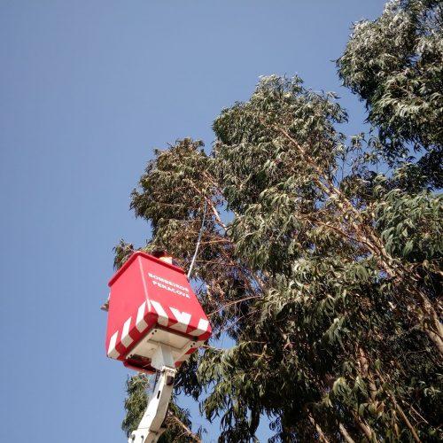 Município de Penacova desativou 85 ninhos de vespa asiática desde o início do ano