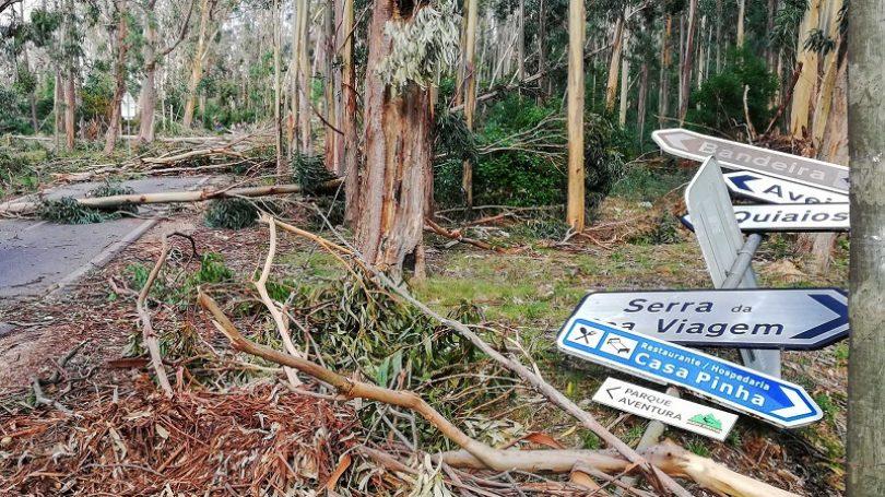 Tempestade Leslie causou 38 milhões de prejuízos na Figueira da Foz