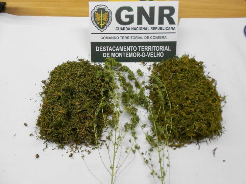 Montemor-o-Velho: Homem detido por tráfico de estupefacientes