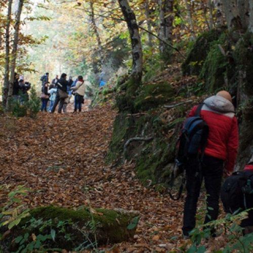 CISE organiza saída de campo e curso de identificação de cogumelos
