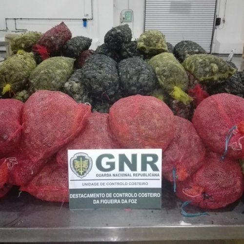 Aveiro e Nazaré: Apreendidas 1,5 toneladas de crustáceos e pescado
