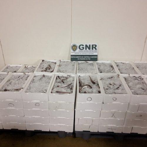 Gafanha da Nazaré: Apreendidos 506 quilos de pescado