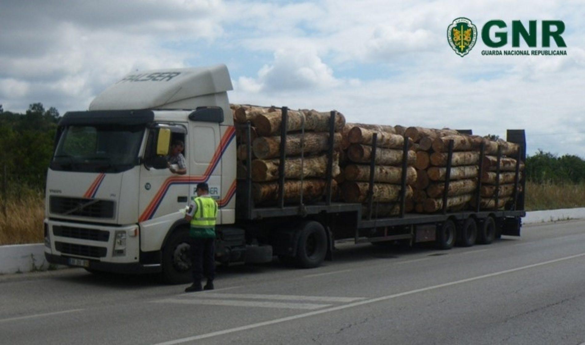 GNR registou 628 infrações no controlo do Nemátodo da Madeira do Pinheiro