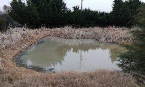 Mangualde: Bloco de Esquerda preocupado com a poluição da Ribeira da Lavandeira
