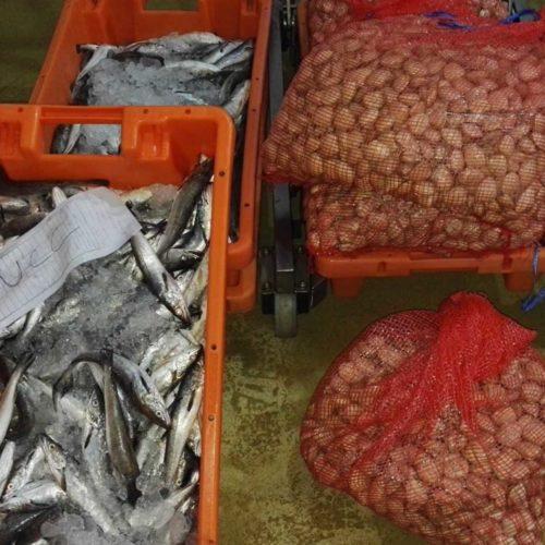 Aveiro: Duas mulheres identificadas por transporte ilegal de pescada e amêijoas