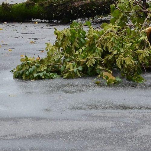 Mau tempo provocou quedas de árvores e deslizamentos de terras no concelho de Oliveira do Hospital