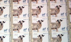 CTT lança selos em defesa da Ovelha Bordaleira