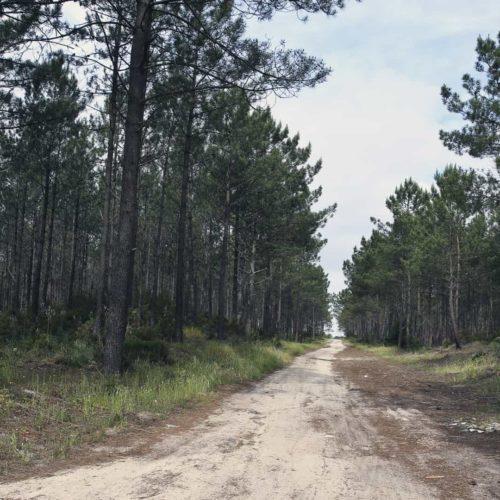 GNR multou ICNF por falta de limpeza da Mata Nacional de Leiria