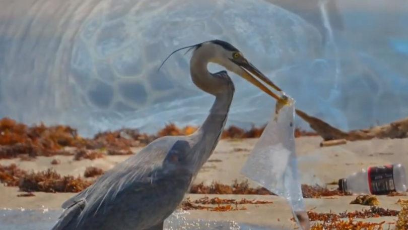 """Alunos do Agrupamento de Escolas produziram vídeo em defesa do """"Oceano Vivo"""" (Com vídeo)"""