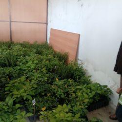 """ARCIAL e Quinta dos Jugais entregaram as primeiras 2300 árvores da campanha """"Sementes Solidárias"""""""