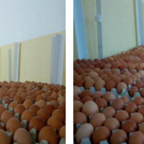 ASAE apreende cerca de 402 mil ovos na região centro