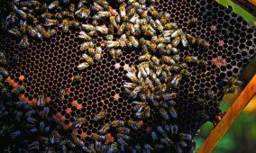 Trabalhadores do Metro doam 50 colmeias a apicultores do concelho de Oliveira de Hospital