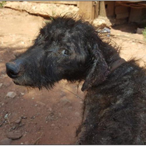 GNR identificou casal por maus tratos a animal de companhia
