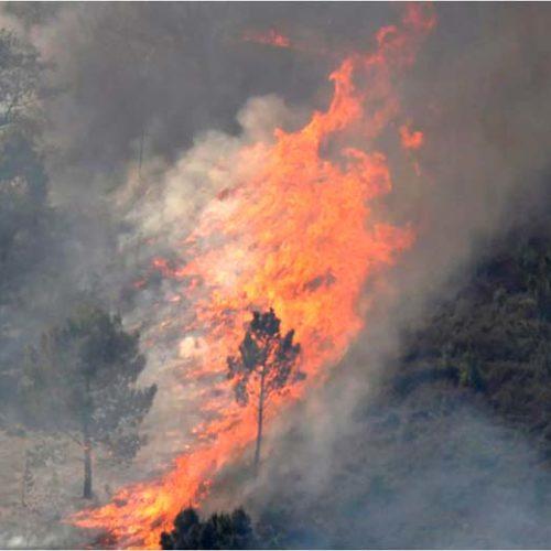 Incêndios: Autarca de Vila de Rei aponta para 3.700 hectares de floresta ardidos