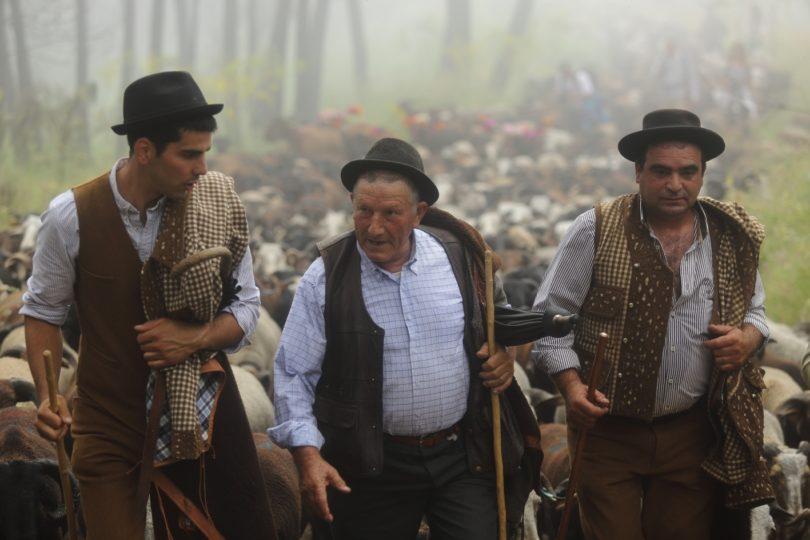 Pastores de Seia sobem à Serra da Estrela e convidam turistas a serem pastores por um dia