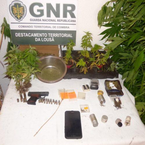 Góis : Homem detido na posse de 64 plantas de cannabis