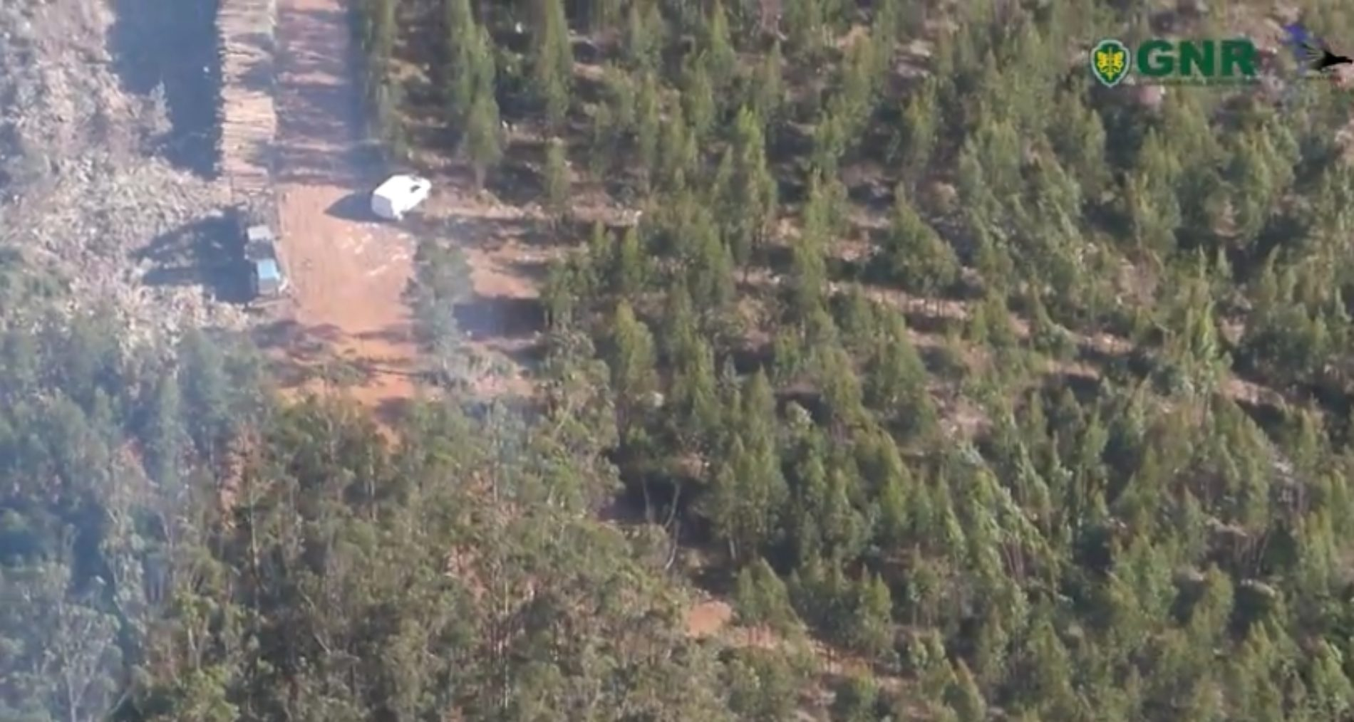 Patrulha Aérea deteta corte ilegal de árvores em Espaço Florestal (Com vídeo)