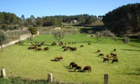 Governo reforça vigilância em zonas com pastos