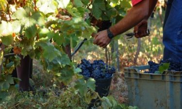 Região do Dão ambiciona ter os vinhos com a maior qualidade do país