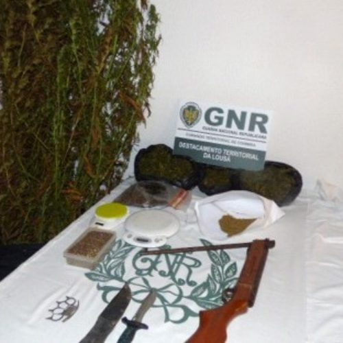 Góis: Detido por cultivo de cannabis e posse de arma proibida