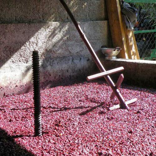 Região: Homem morreu em lagar de vinho enquanto pisava uvas