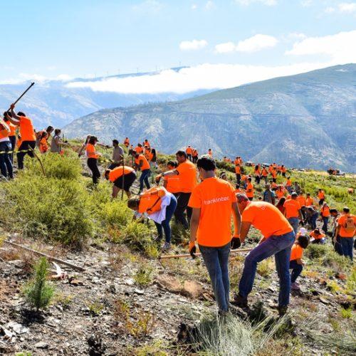 Voluntários Bankinter recuperam floresta ardida em Arganil