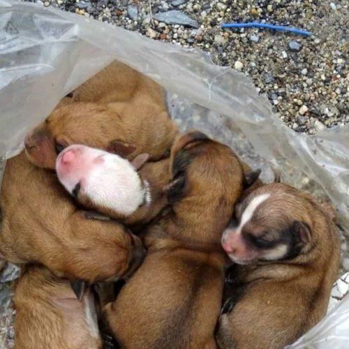 Região: GNR resgatou cães que foram colocados no caixote do lixo