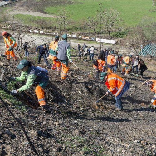 Voluntários Bankinter voltam a Pomares para cuidar de árvores plantadas