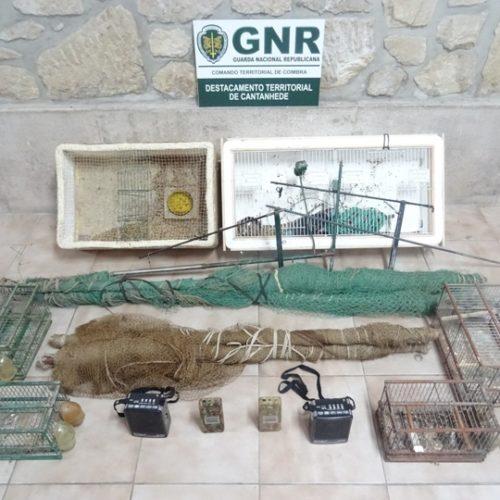 Região: GNR apreendeu 38 aves capturadas ilegalmente