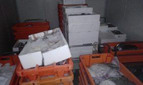 Mulher vendia pescado impróprio para consumo na Costa Nova