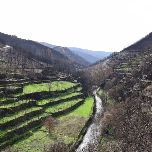 Seia: Município vai plantar 2500 medronheiros em Vide